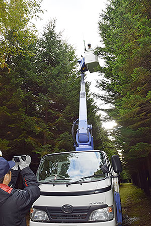 高所作業車で樹高を測定