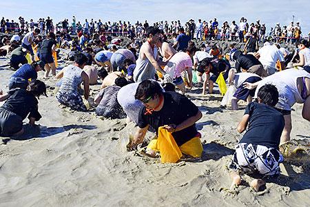 KP10101134512141 - 【北海道】ホッキ貝つかみどり、600人夢中で挑戦 あつま海浜まつりで夏を満喫